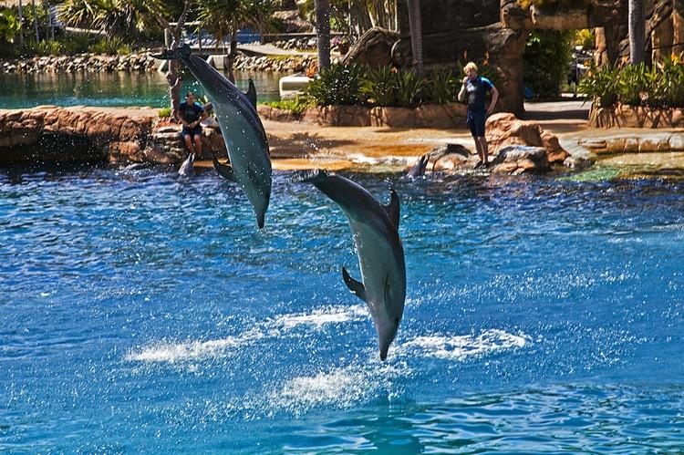 海洋世界 華納威秀主題公園 黃金海岸海洋世界 海洋世界門票 海洋世界地址 黃金海岸旅遊