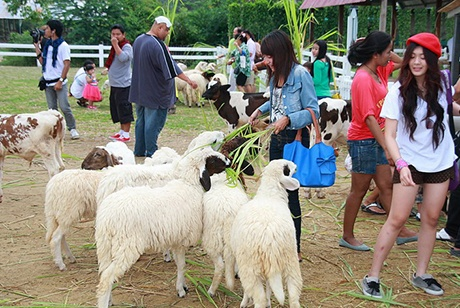 泰國華欣瑞士綿羊牧場門票,華欣綿羊牧場門票,泰國華欣綿羊農場門票,泰國華欣景點