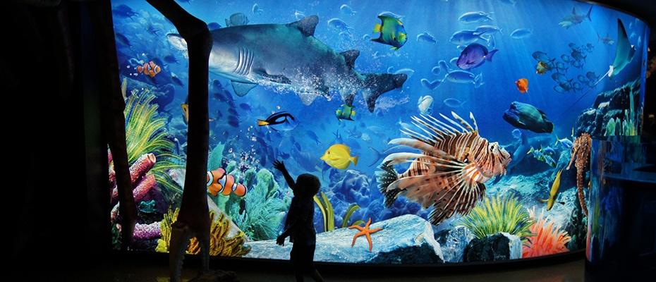 泰國曼谷暹羅海洋世界水族館Siam Ocean World門票電子票,泰國曼谷景點,曼谷海洋館,曼谷海洋公園
