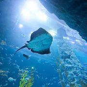 韓國首爾樂天世界+水族館套票