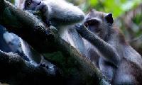 泰国拷索國家公園2天1夜叢林TOUR大冒險(一)