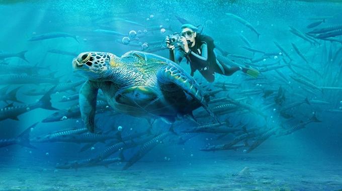 沙巴美人魚島101度假村潛水一日遊