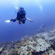 布吉斯米蘭群島+蘇林群島2天1晚有證潛水遊(7潛)