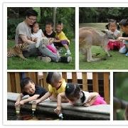 上海野生動物園門票